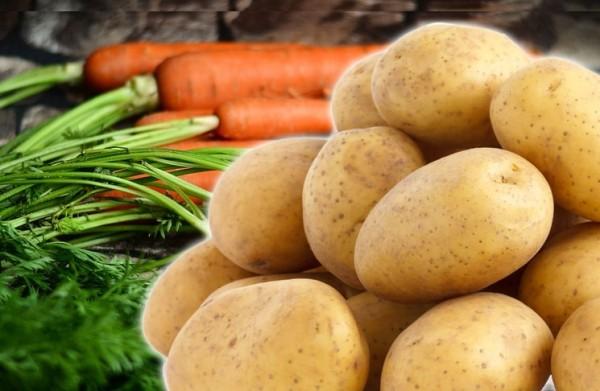 BARF pürierter Kartoffel-Möhren-Mix mit wichtigen Vitaminen